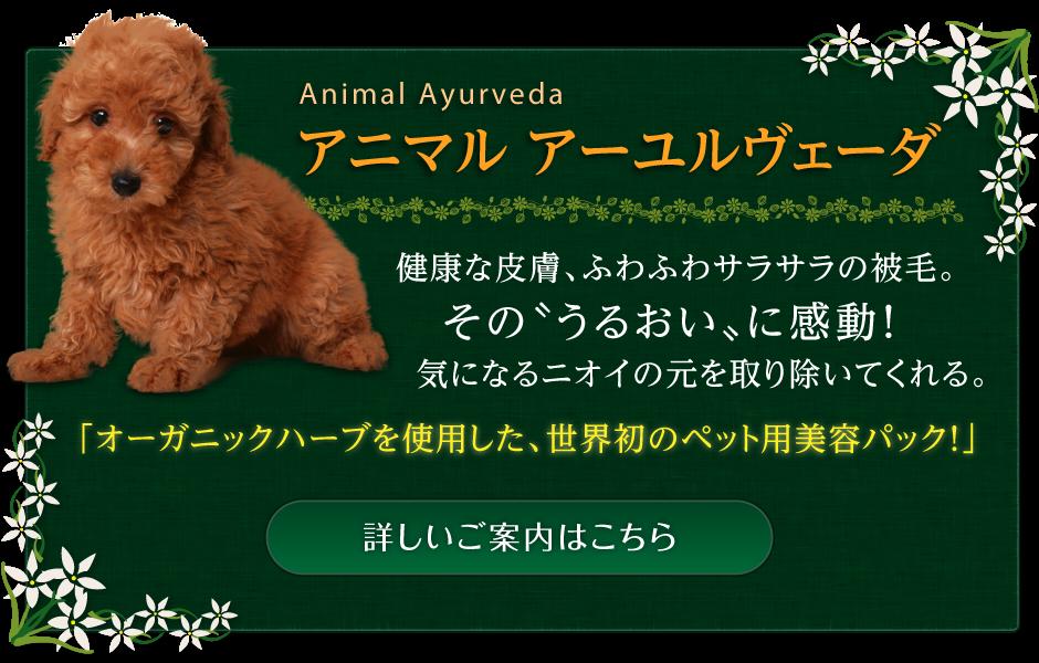 アニマル アーユルヴェーダ Animal Ayurveda 健康な皮膚、ふわふわサラサラの被毛。その〝うるおい〟に感動!気になるニオイの元を取り除いてくれる。オーガニックハーブを使用した、世界初のペット用美容パック!