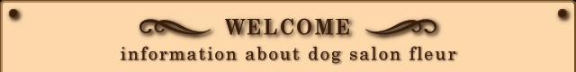 英語でのドッグサロンフルールの案内