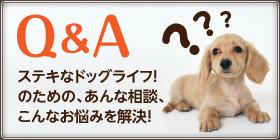 Q&A ステキなドッグライフ!のための、あんな相談、こんなお悩みを解決!