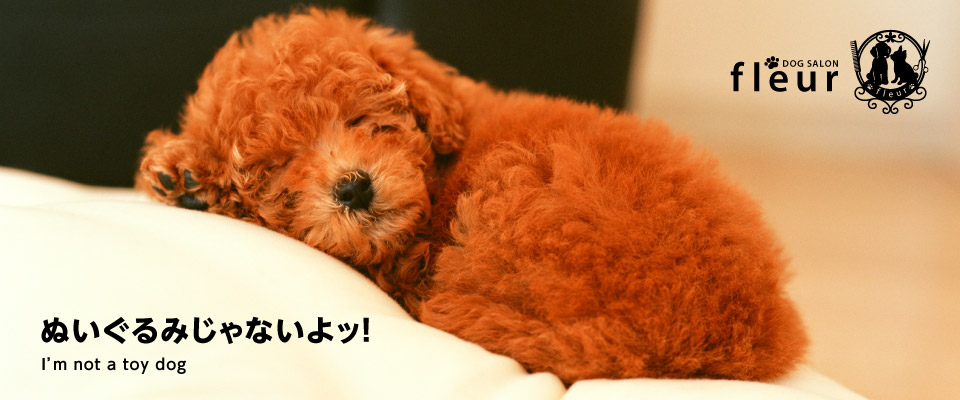 京都でドッグサロン・ドッグホテルをお探しなら動物看護師のいるドッグサロンフルールへ。